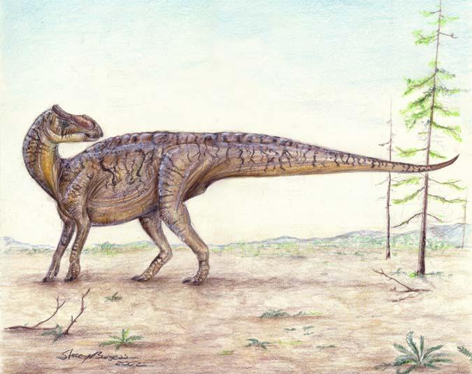 brachylophosaurus - photo #13